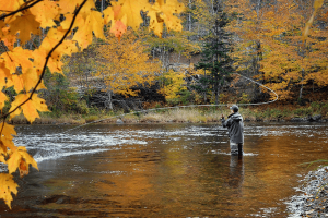 Fly fishing in the Smoky Mountains